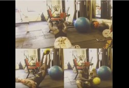 The Best Ab Exercise