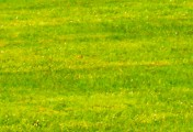 How to Keep Your Lawns Green
